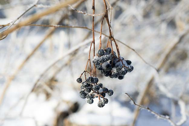 Finding Food | The Prepper's Guide To Winter Survival