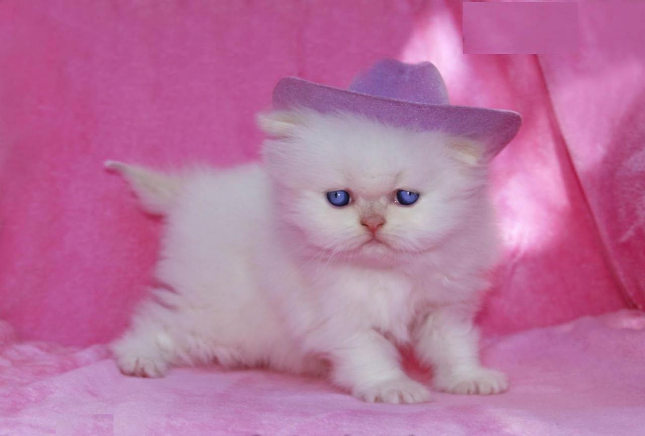 أجمل قطط في العالم The Most Beautiful Cats In The World