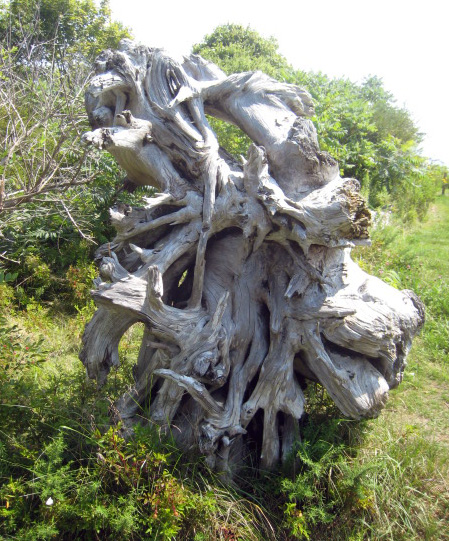 Old Tree Root