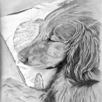 Golden Retriever in Graphite