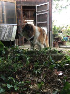 作業をしていると隣の家から現れた犬。