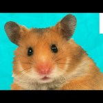 6 Weird Hamster Facts You May Not Know   Fuzzy Friday