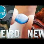Pilot Dogs, Viagra Consent & Octo Abstinence: The Dispatch Ep. 15