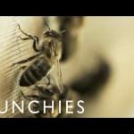 The Liquid Gold of Urban Beekeeping