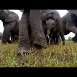 GoPro: Get Up Close With Wild Elephants