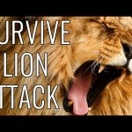 Survive A Lion Attack – EPIC HOW TO