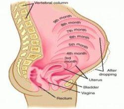 صورة علاج البواسير للحامل بالاعشاب وكيفية تجنبها خلال الحمل