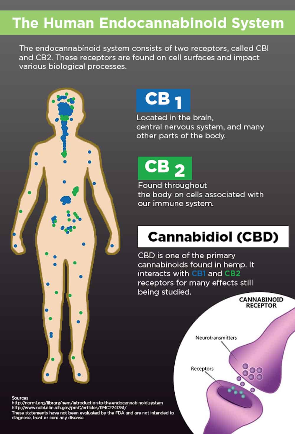 The Endocannabinoid System: What Nobody is Actively Discussing