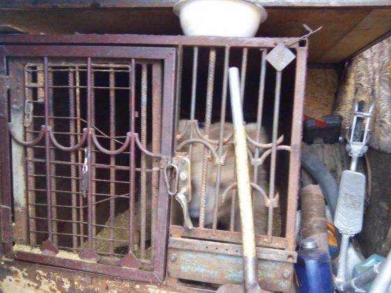 Клітка, в якій жила ведмедиця