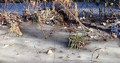 Алігатори в Північній Кароліні повмерзали в лід - відео