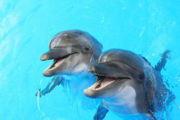 Українські бойові дельфіни відмовилися служити російським окупантам. Вони загинули
