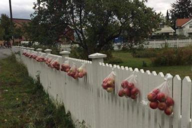 Інгер Гарос з містечка Мйондален, Норвегія, безплатно роздає яблука із свого саду усім охочим