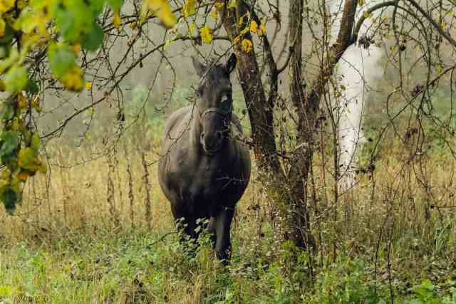 """Кінь із фільму """"Чорний ворон"""""""
