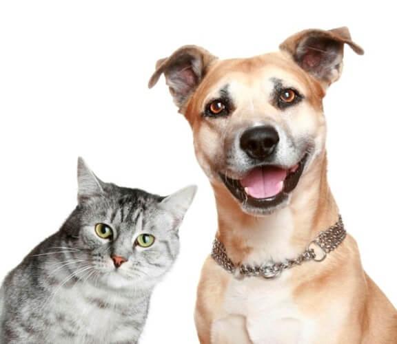 Скільки років живуть домашні тварини - коти і собаки