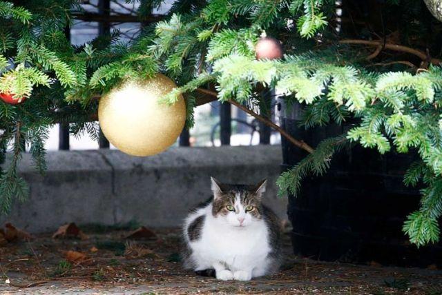 Кіт Ларрі - фото під ялинкою