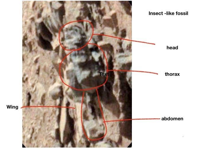 марсіанська комаха