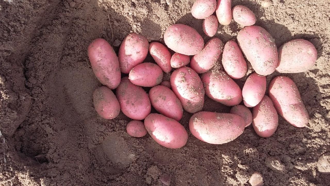 import aardappelen