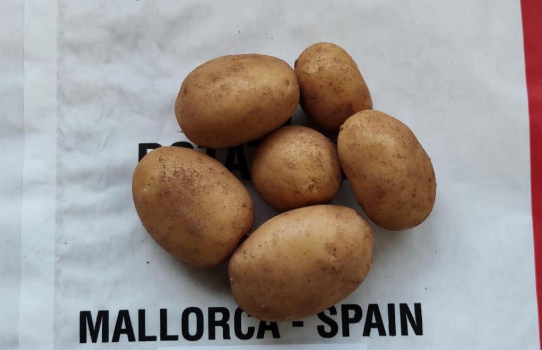 Mallorca spanje aardappelen potatoes