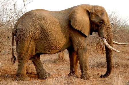 KrugerPark 054