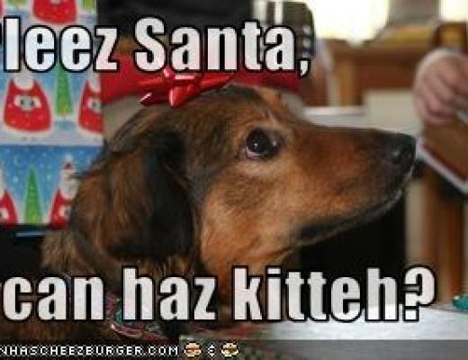 Dog Can Haz Cheezburger? (Weekend Assignment #281)