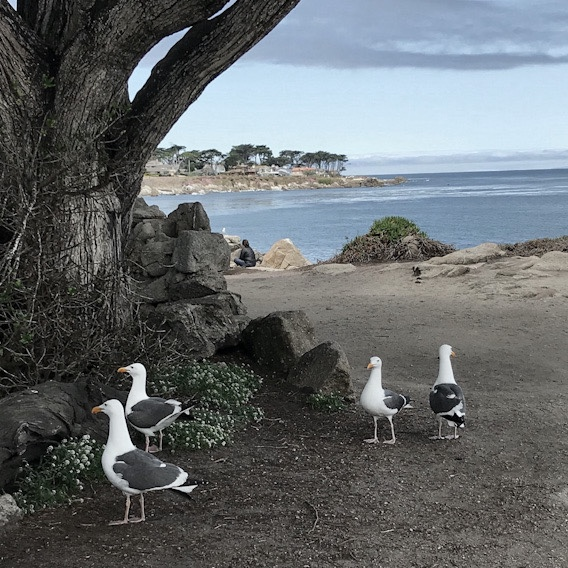 seagulls standing around