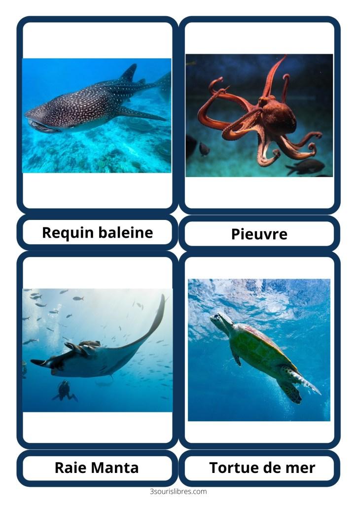 Cartes de nomenclature Animaux marins Tortue de mer, Raie Manta, Requin baleine et Pieuvre