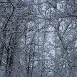 First Snow 2013: 3ten.ca
