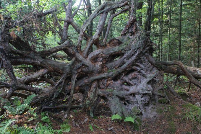 Michigan Hike: 3ten.ca