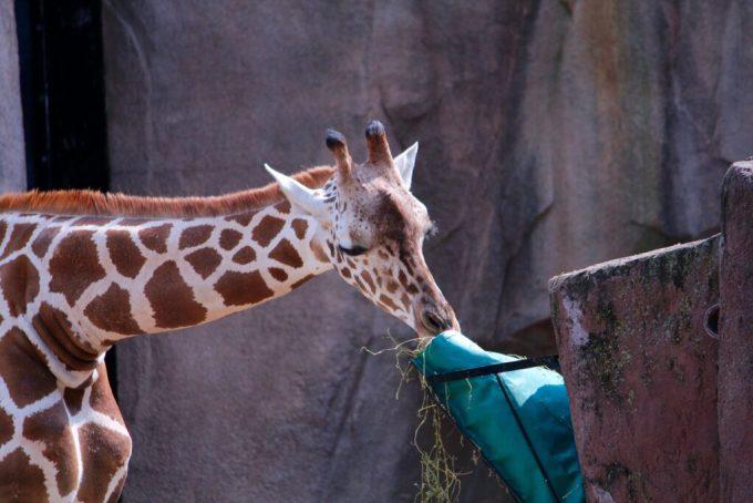 3ten.ca: Milwaukee Zoo