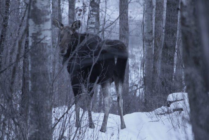 Photos Moose 2.0: 3ten.ca