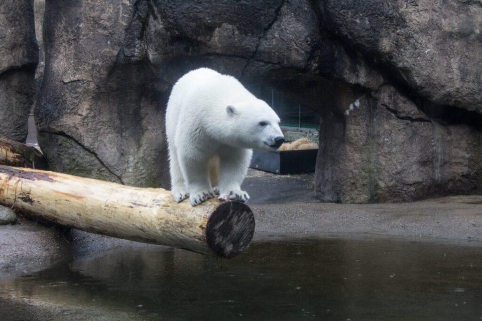 Oregon Zoo: 3ten.ca