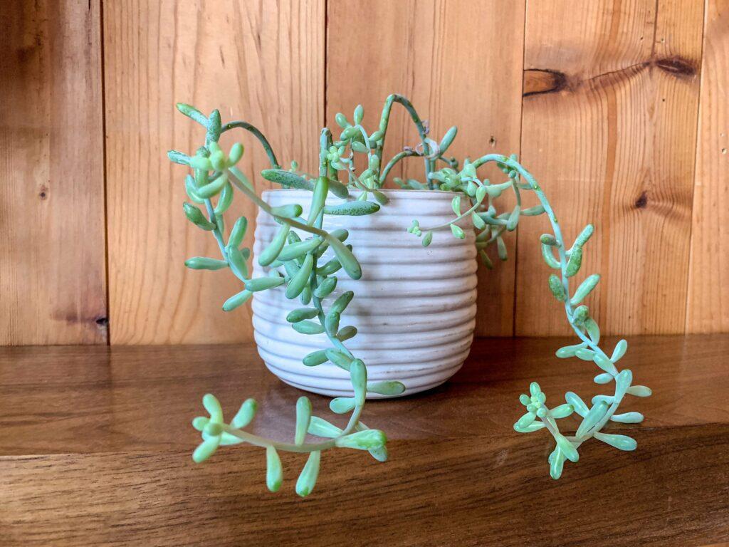 Plants: 3ten.ca