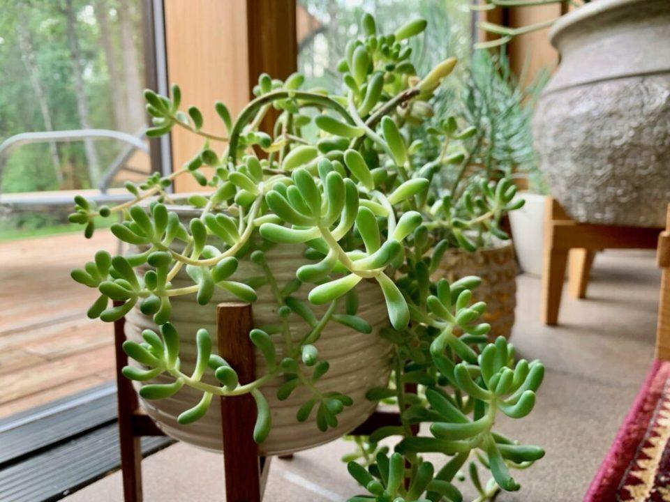 Plants 2.0: 3ten.ca