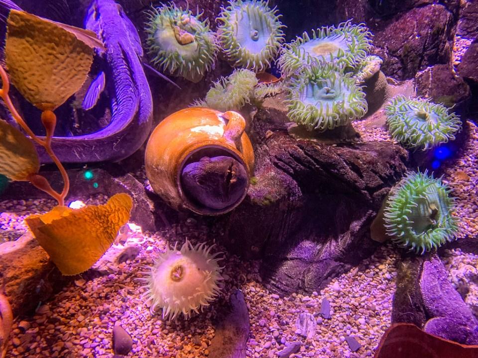 Sea Life Aquarium: 3ten.ca
