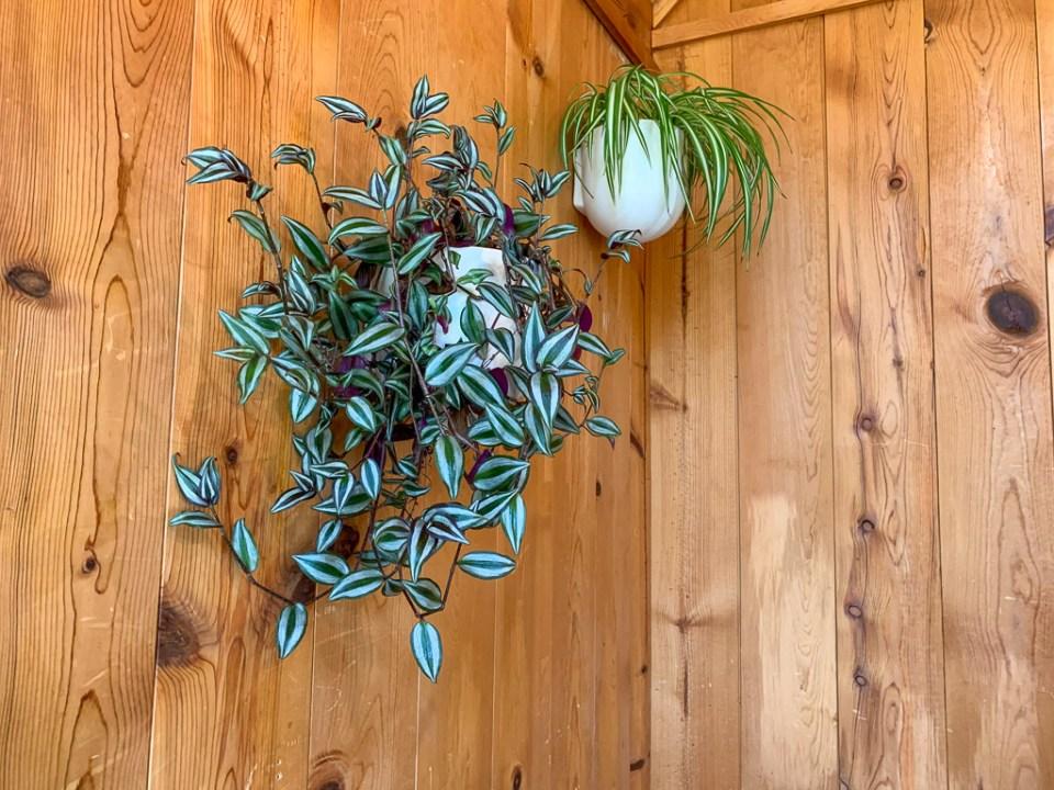 Plants 3.0: 3ten.ca
