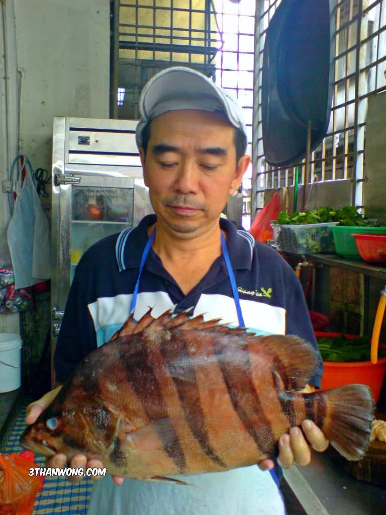 Indo Tiger Fish