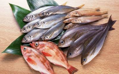 List of Fish – Complete List!