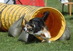 Fysträning för hund, del 1.