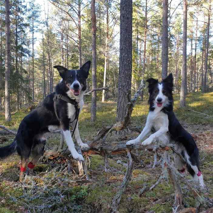 skogsparkour3