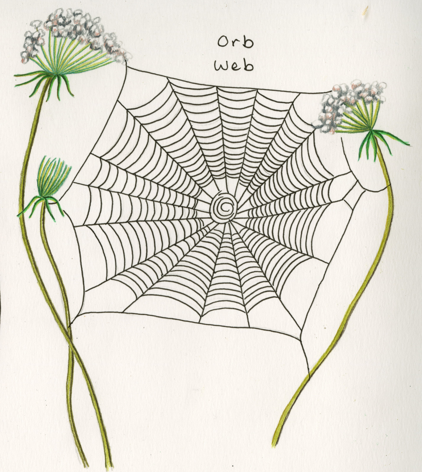 How To Recognize Spiders By Their Webs