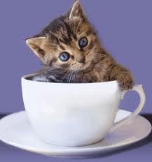 tea cup kitty
