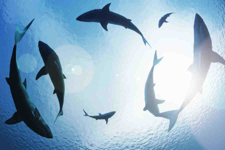 Why You Should Swim With Sharks
