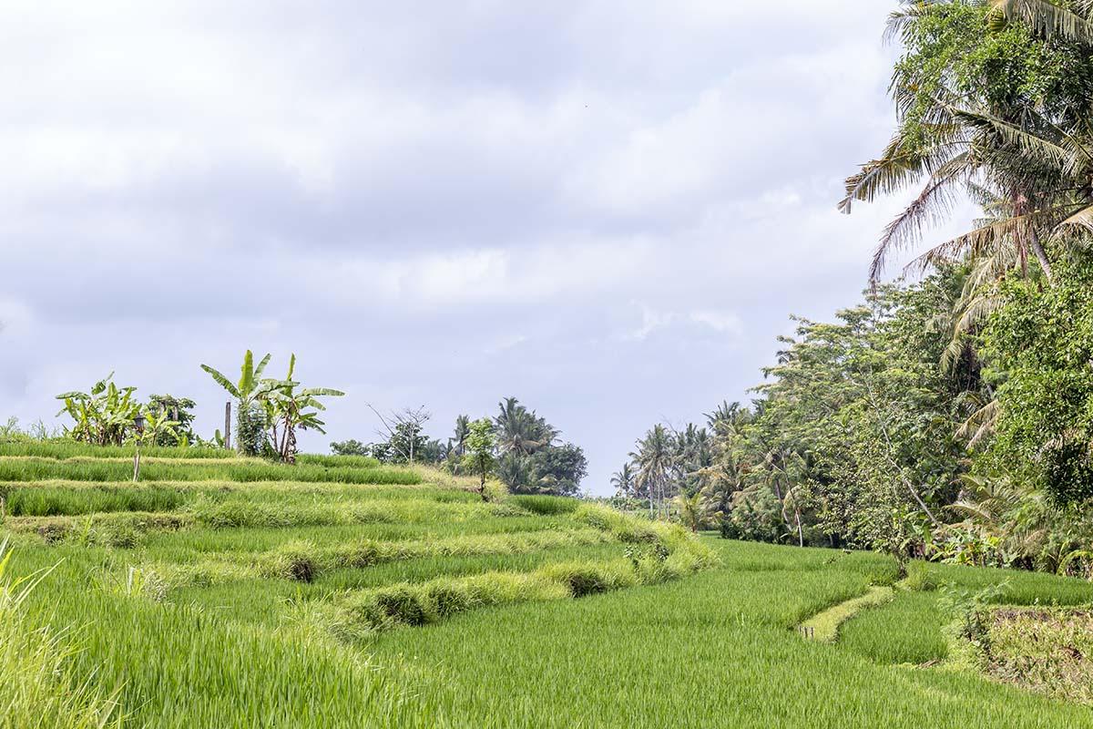 Week 43, Jenny Smit, Bali, Indonesië