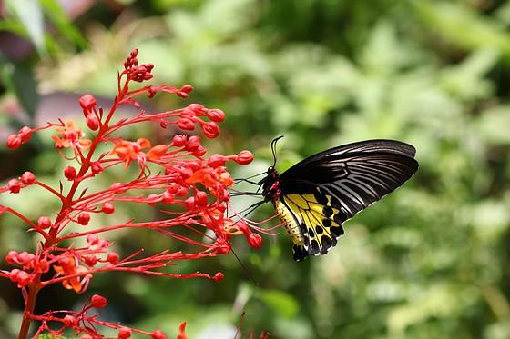 Some Butterflies Photos Taken With Eos M50 Canon Eos M