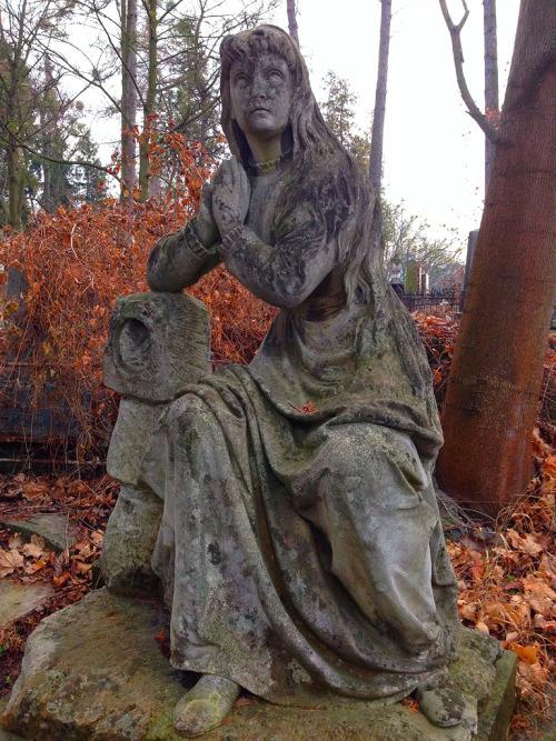 Forest History Mythology Black Germany