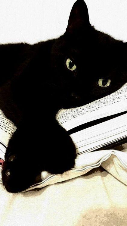 Black katt.......