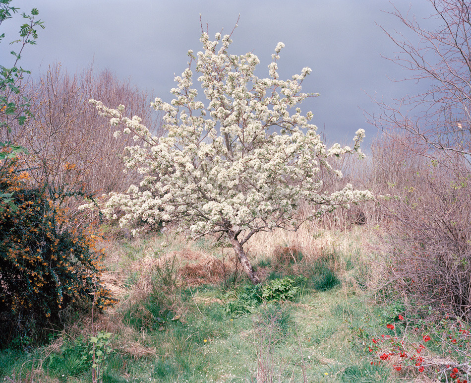 mfjr:  Lorna's Garden, Ireland, 2012  by Robert Ellis