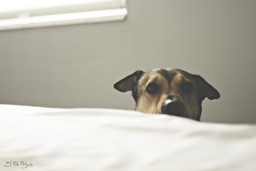 threedogsnight:</p> <p>Alarm Clock by 3rd-Rate Photography on Flickr.