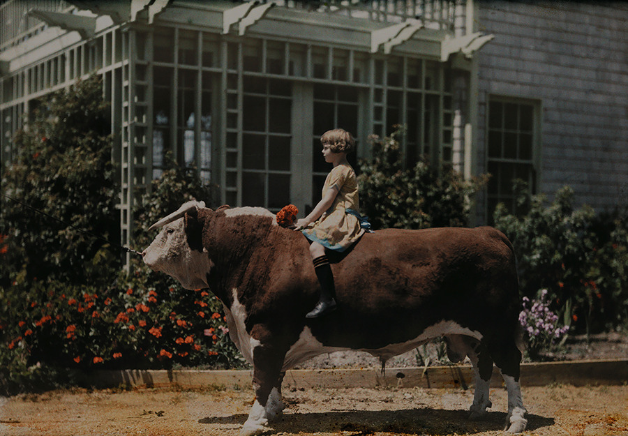 A child sitting on a Hereford bull near Pleasanton, California, 1926. Photograph by Charles Martin, National Geographic Creative