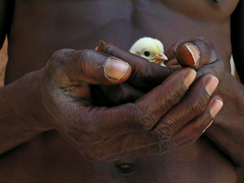 fotojournalismus: Senegal,Olivier Föllmi